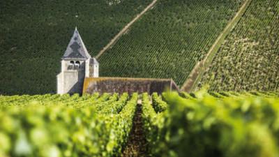 Tournus wine