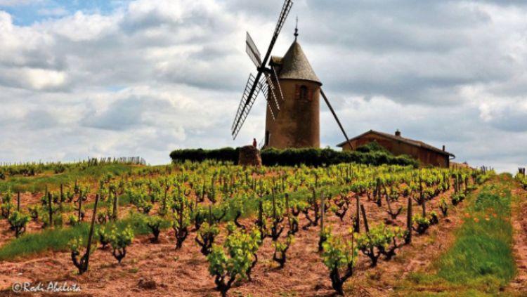 Vineyard side